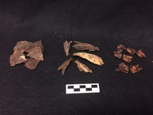 Assortment of fish bone from the West Circle Privy
